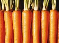 胡萝卜素不是胡萝卜